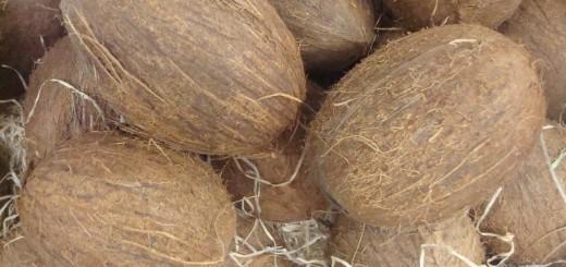 stockvault-coconuts135841