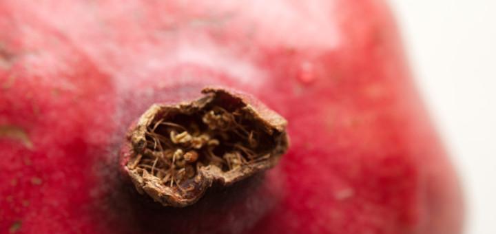 stockvault-pomegranate128245